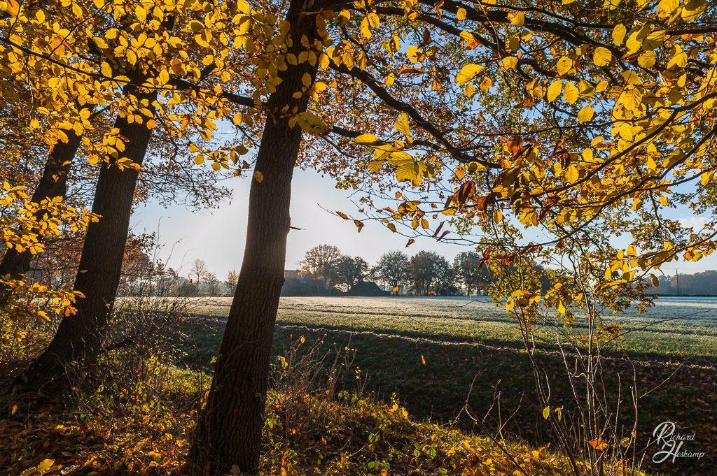 Herbst in Bruemsel