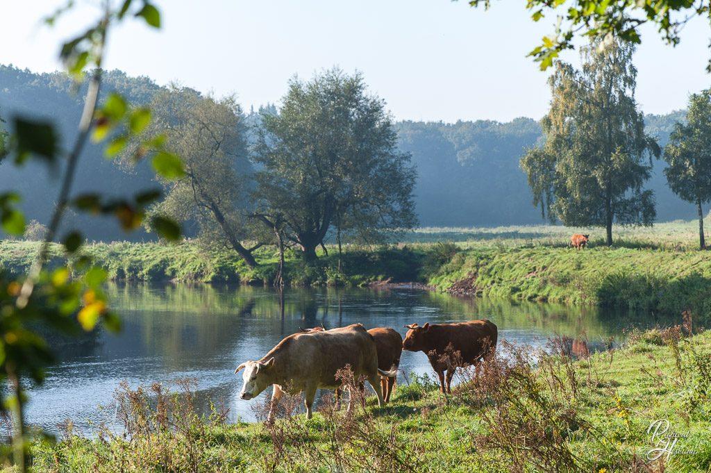 Septembermorgen an der Ems bei Schepsdorf
