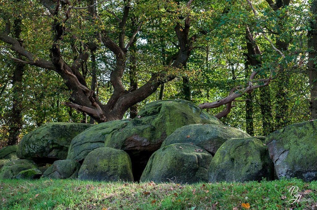 Herbstliche Landschaft Lingen-Haseluenne-Meppen